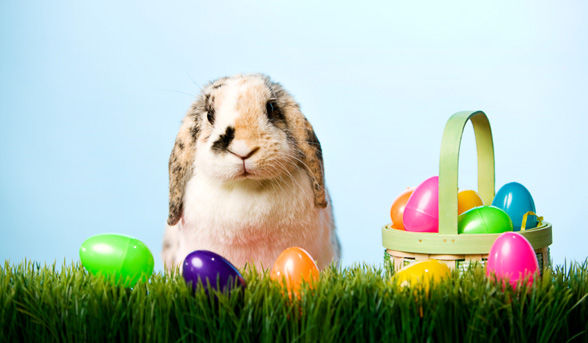 Since when bunnies lay eggs? Pastor Jayon George |